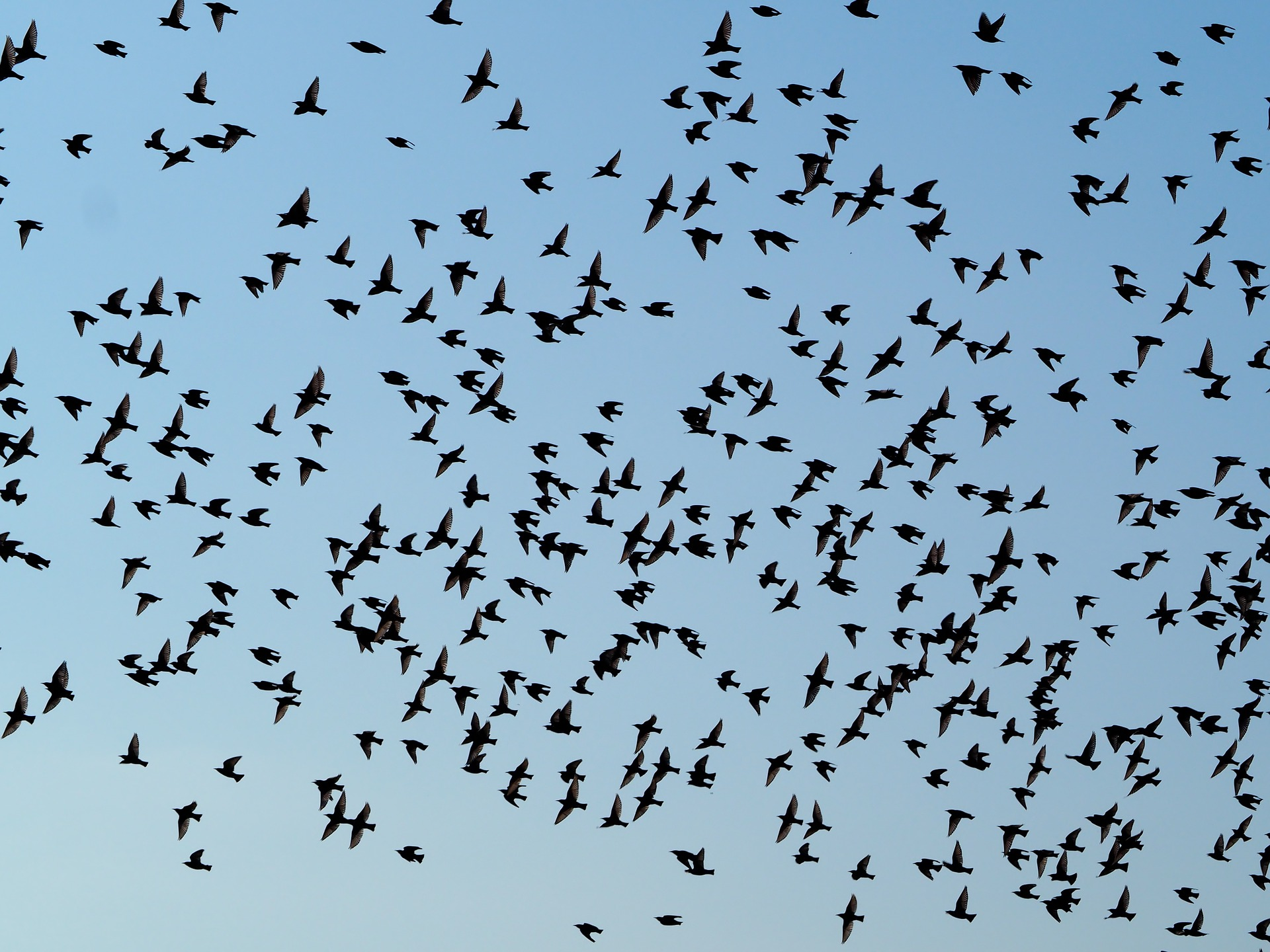 Managing organisations in the same ways birds manage to fly together